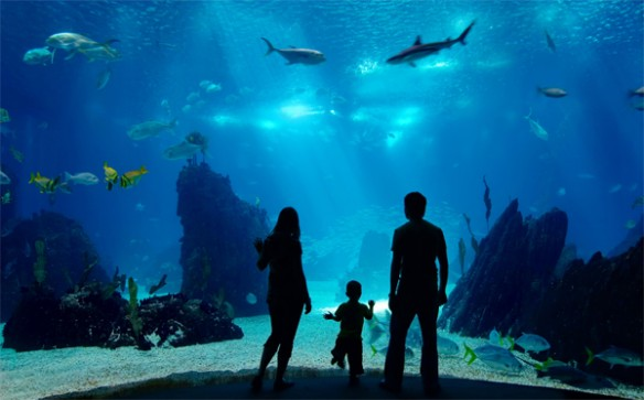 Developer Eyes North Riverview For New Aquarium