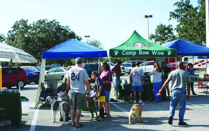 An All-Day Affair For Healthy Pets At Dog Gone Holistic's Pet Fest