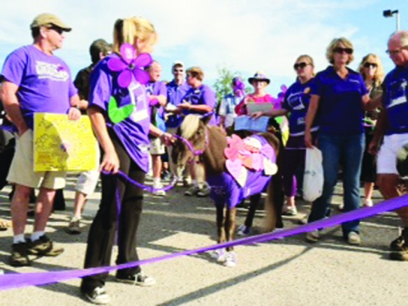 Therapy Horse Helps Heal Hearts In Community
