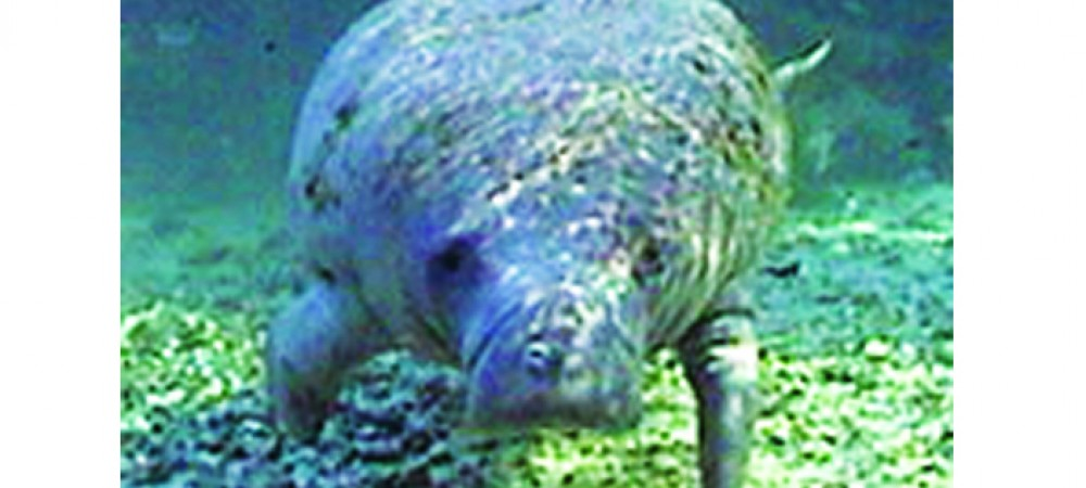 Manatee Population Depends On Public Awareness