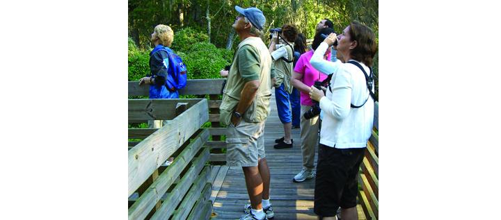 Local Birders Visit Cockroach Bay Preserve