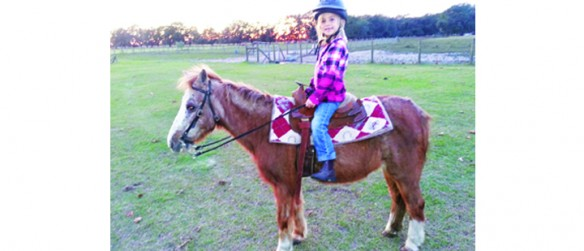 T.L.C. Gypsy Haven Horse Farm's New Educational 4-H Group