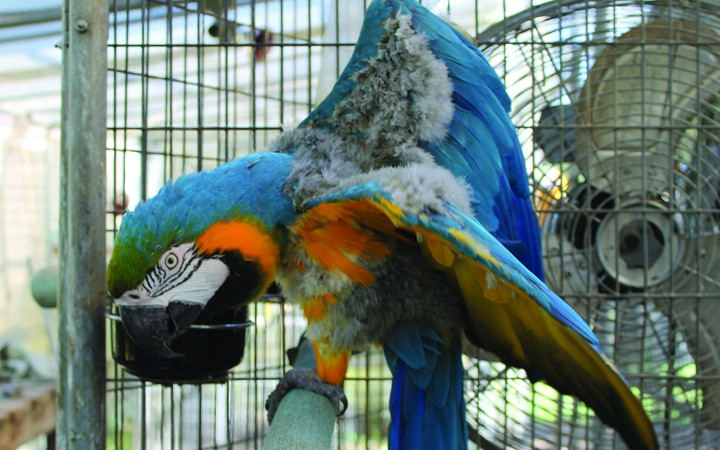 Taking Flight On Future Expansion Is Goal Of Florida Exotic Bird Sanctuary