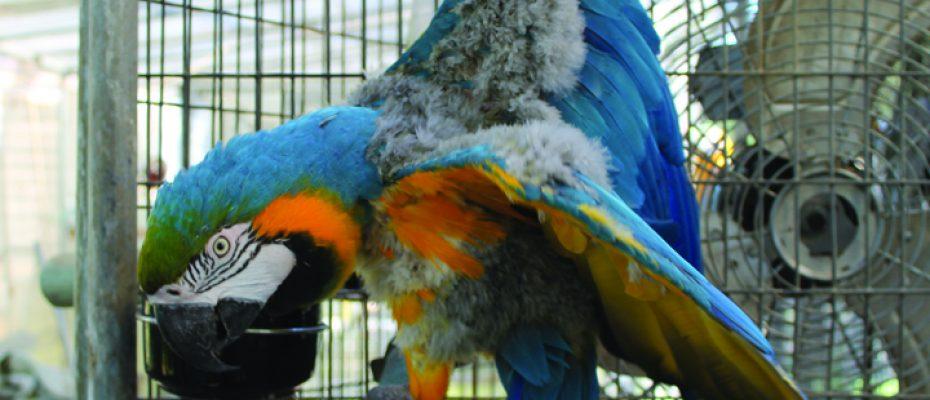 Bird Sanctuary_1 F