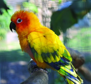 Bird Sanctuary_1-G
