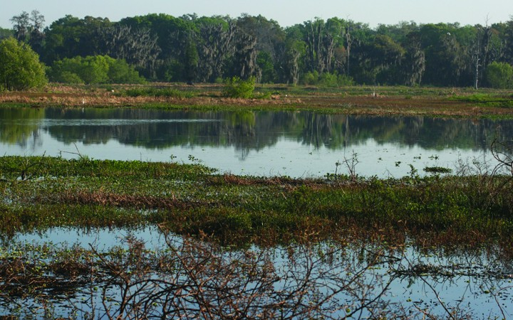 Exploring Wild Florida: Circle B Bar Reserve