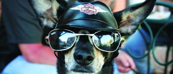 Brandon Harley-Davidson Hosts Animal Adoption Fair