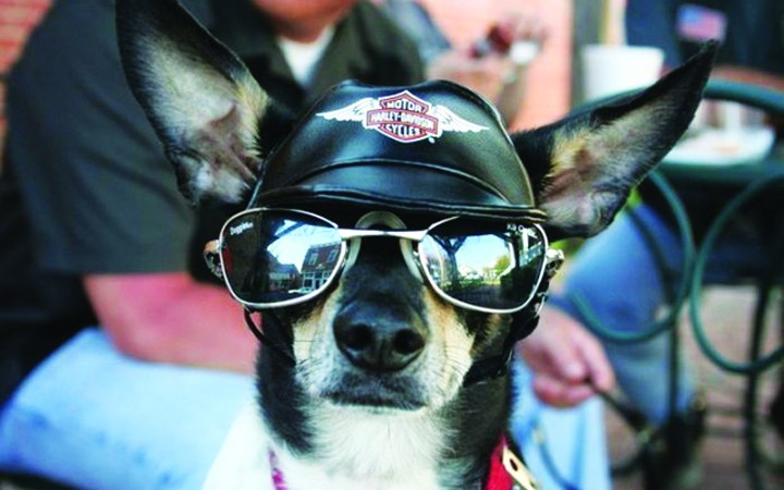 Brandon Harley-Davidson Hosts Animal Adoption Fair