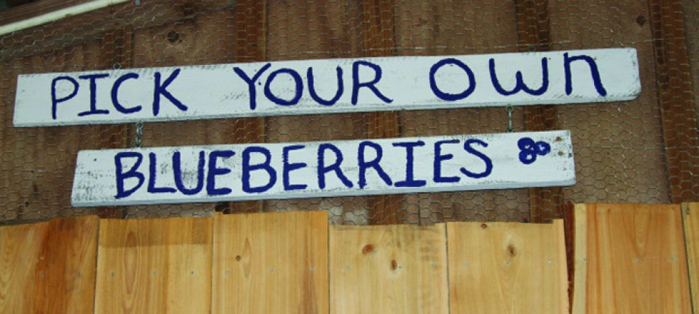 Local Blueberry Farms Across The Community Offer U-Picks, Jams And More