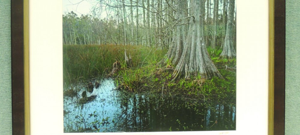 Florida Nature Preserve Photographs On Display At Bruton Memorial Library