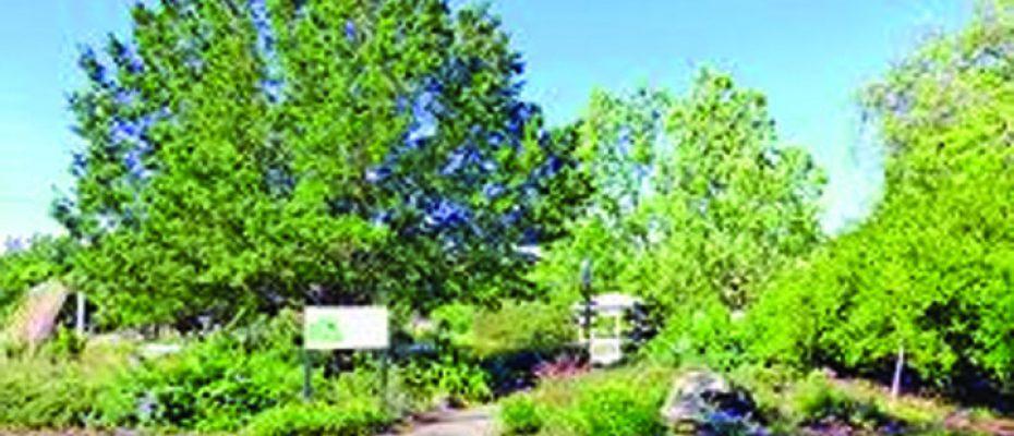 MOSItree grove 2