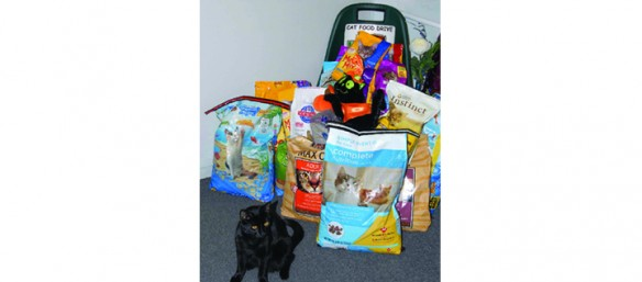 South Shore Felines Making Positive Impact On Community, Cats