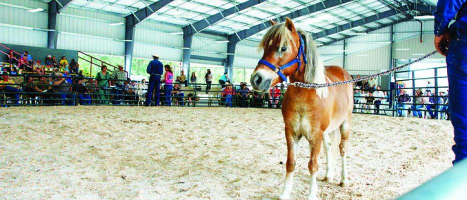 Cowboy Up Ministry Pony