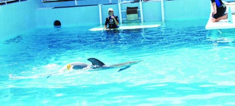 DolphinTaleWinter1