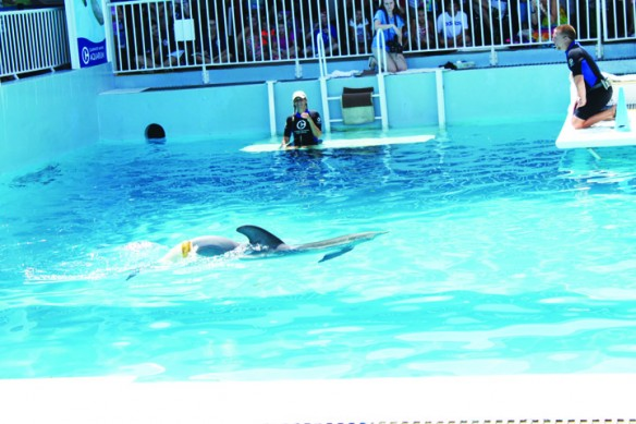 Dolphin Tale 2 Continues Story Of Rescued Dolphin, Brings Revenue To Aquarium