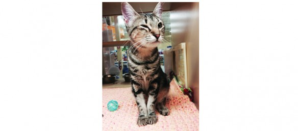 Local Cat Rescue Seeks Community Help For Surgery For Dora The Kitten