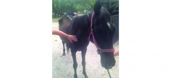 Phoenix Is One Of Many Success Stories From RVR Horse Rescue In Riverview