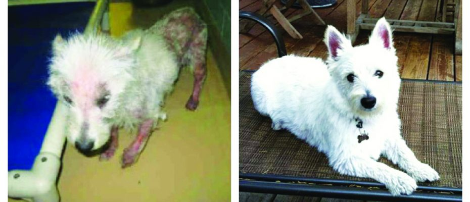 WestiesBefore and After