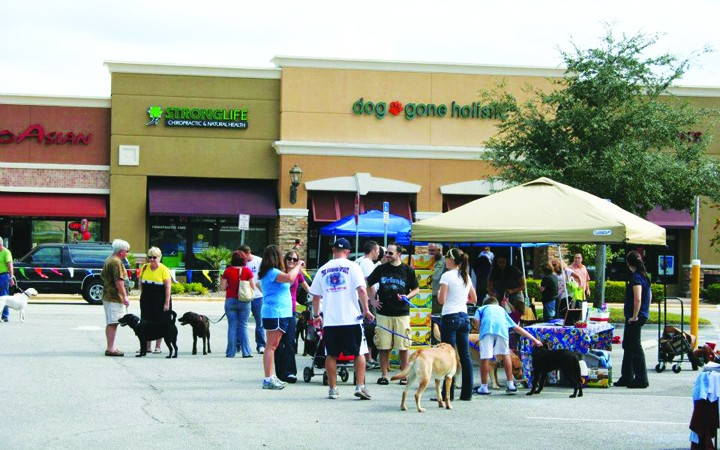 Seventh Annual Dog Gone Healthy Pet Fest To Showcase Vendors, Fundraise For Rescues