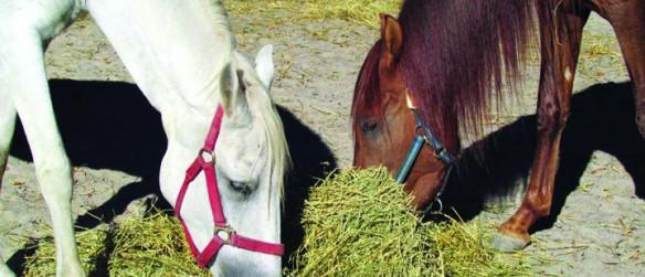 Rescue Organizations Coordinate To Reunite Grieving Horses