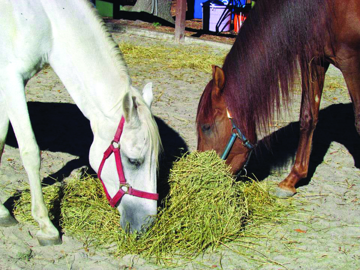 Rescue Organizations Coordinate To Reunite Grieving Horses