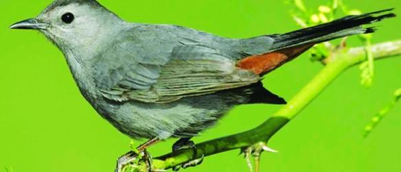 Rich's Backyard Birds: January 2015