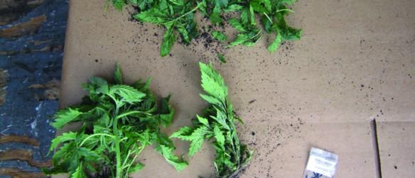 Deputies Discover Marijuana Grow House In Valrico