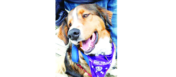 Second Annual Dogapalooza Seeks To Find Homes For Rescued Pets