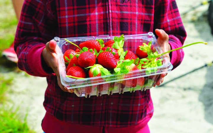 Friends Of FishHawk Share Strawberry Fever With A Kids Place Children