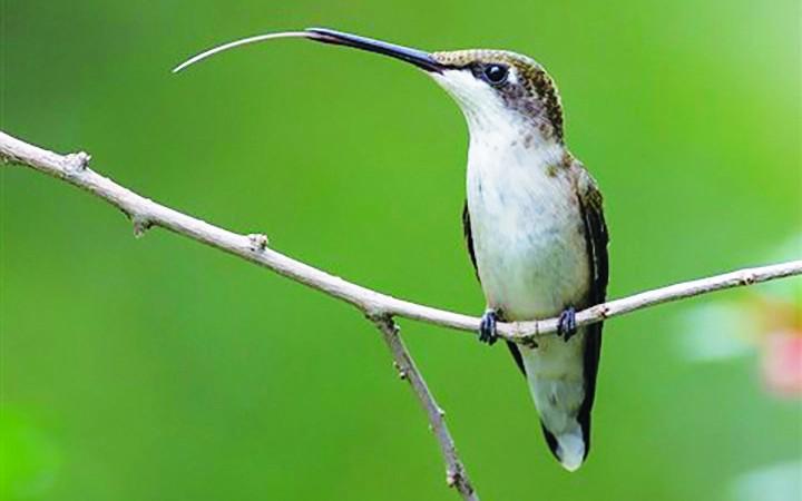 September: Rich's Backyard Birds
