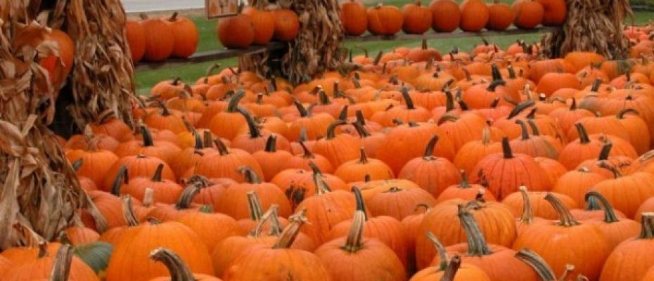 Upcoming Local Family-Friendly Fall Festivities