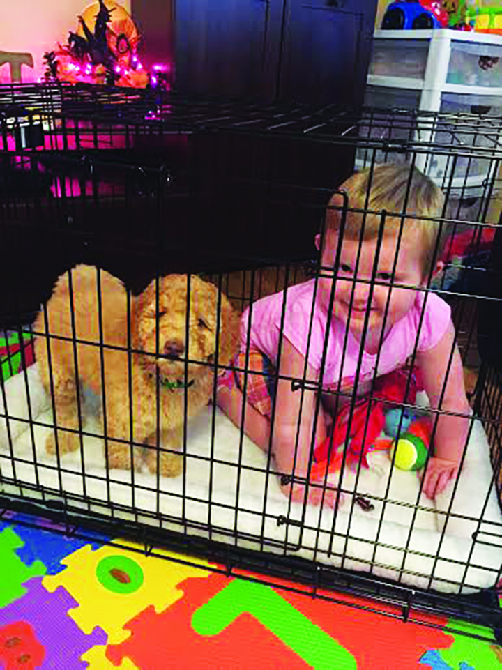 Children's Dream Fund Grants Young Valrico Cancer Patient Furry Friend
