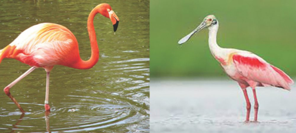 flamingo.001
