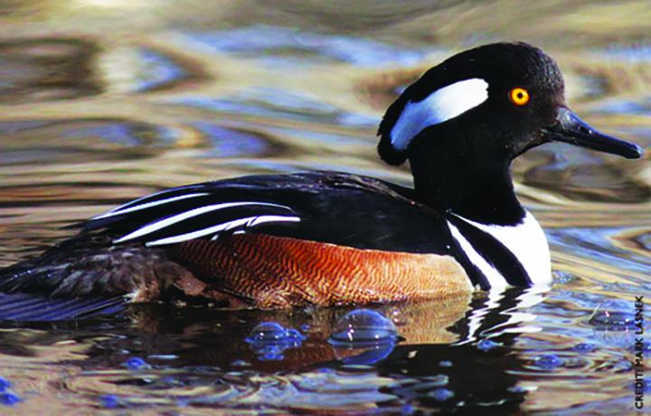 Rich's Backyard Birds: December 2015