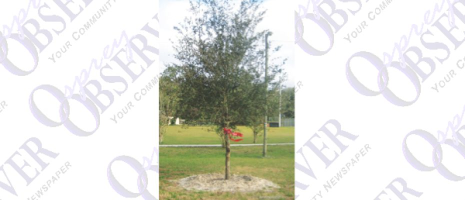 Florida's Arbor Day Celebration Plants New Tree At Sadie Park