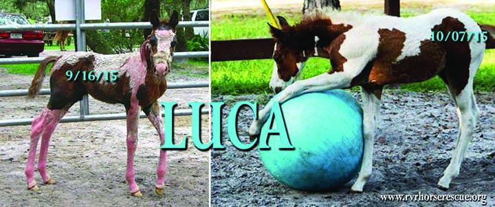 RVR Horse Rescue Celebrates ASPCA Help A Horse Day OnApril 23