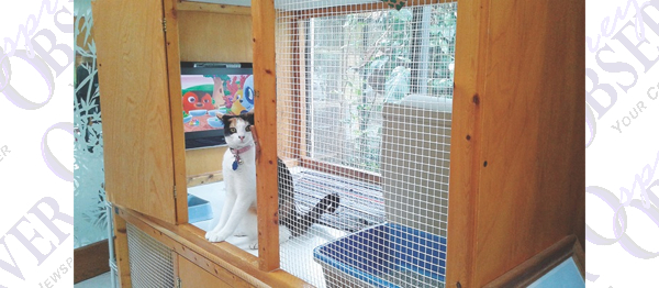 A Country Cat House Provides Luxury Vacation Townhomes For Felines Only