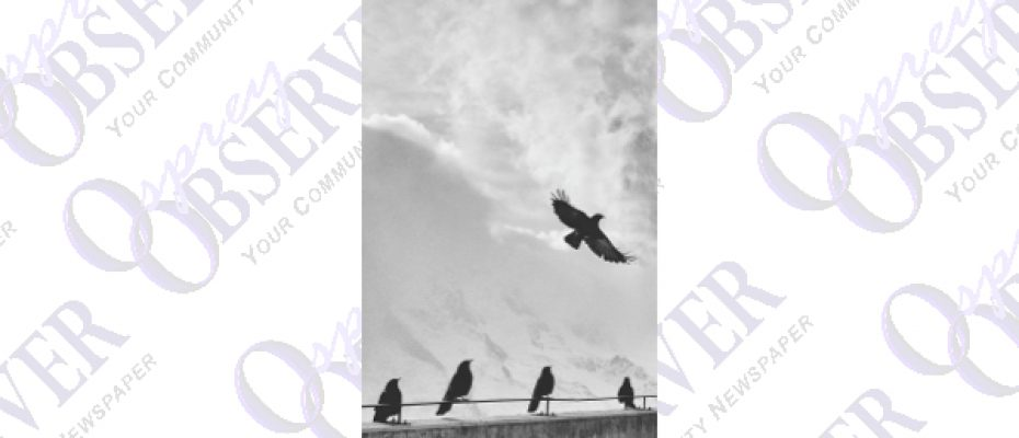 birds.001