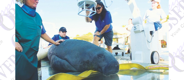 SeaWorld's Sea Rescue, The Wildlife Docs Nominated For Daytime Emmy Awards