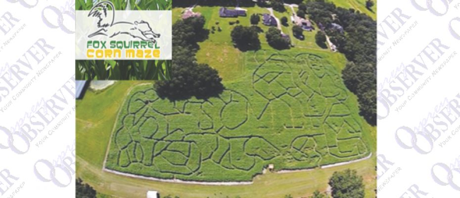 Don't Miss Futch Family Fox Squirrel Corn Maze At Single R Ranch In Plant City