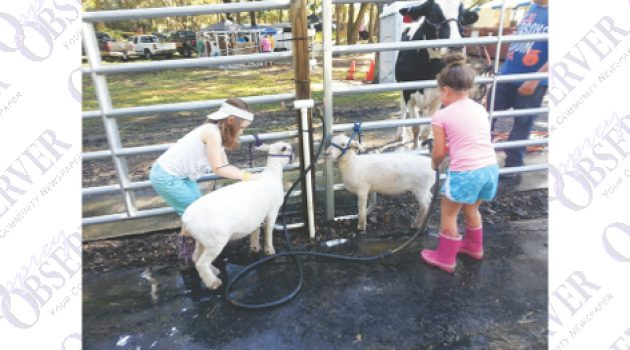 Fair Shows Blue Ribbon Country Pride