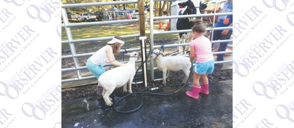 Fair Shows Blue Ribbon Country Pride