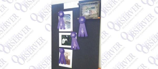 Photographers Can Enter 2016 Hillsborough County Fair Photography Competition