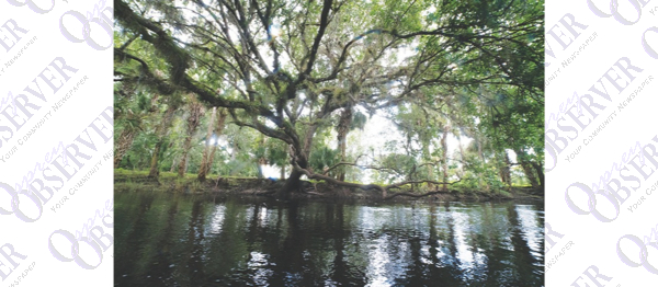 The Florida Outdoors: Peace River