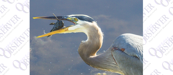 Discover The Wild Side Of Florida At SouthShore Bird & Nature Festival