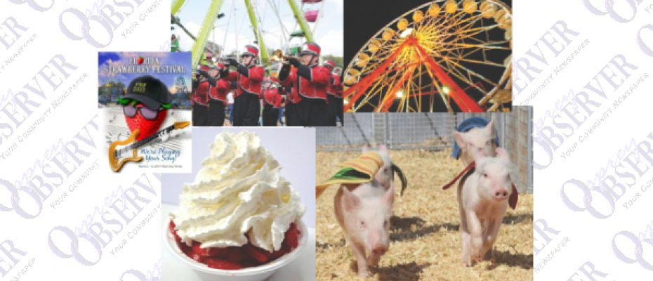 Strawberry Festival Offers More Than Food, Music And Iconic Racing Pigs