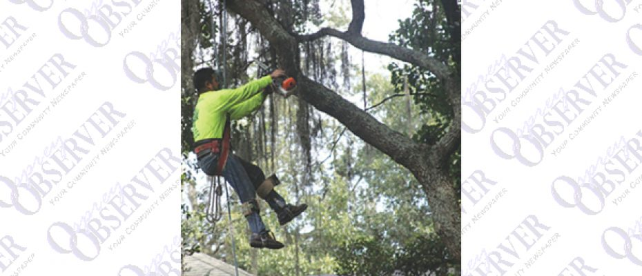 JW Tree Service Goes Out On A Limb For Its Tree Customers