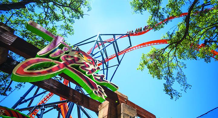 Tigris Opens At Busch Gardens Tampa Bay To Roarin Reviews