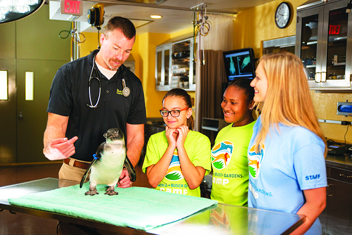 Fun And Education At Busch Gardens And Adventure Island Camps